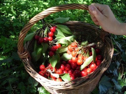 cherry-basket-4130_640
