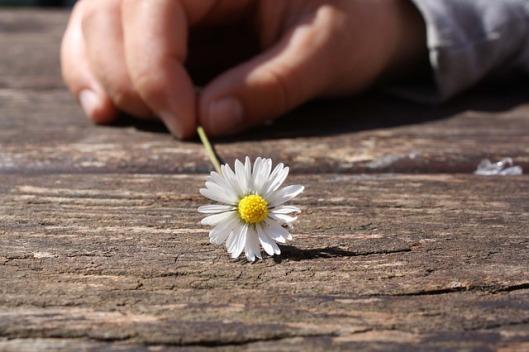 daisy-75190_640