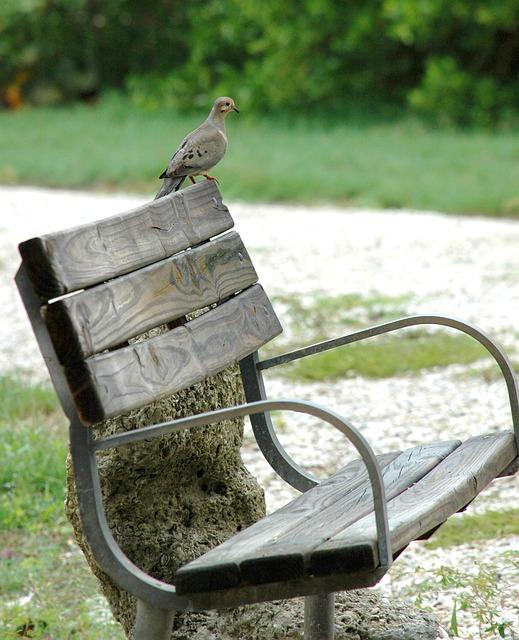 dove-park-bench-89164_640