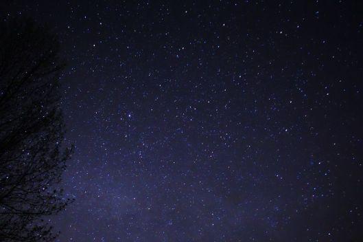 Night_Sky_Stars_Trees_03_by_Michael_J_Bennet