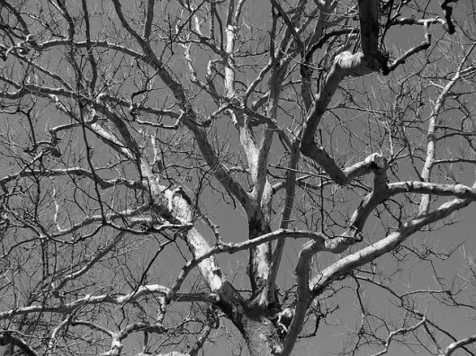 tree-branches-17831_640