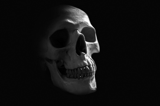 anatomy-71730_640
