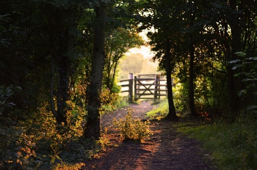 gate-155112_640