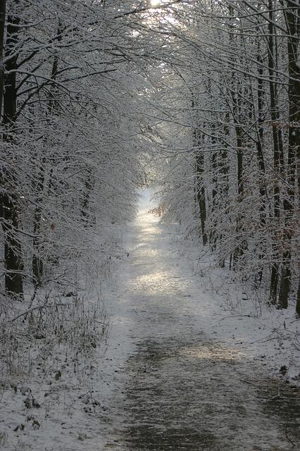 winter-140290_640