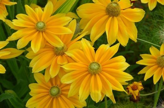 flowers-53815_640