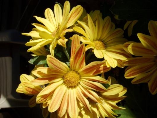 yellow-195_640 (1)