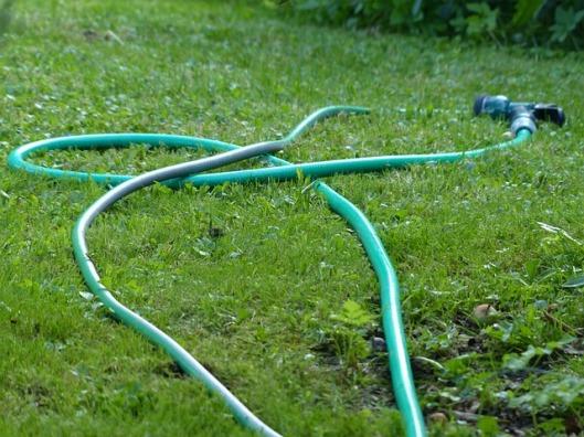 garden-167379_640