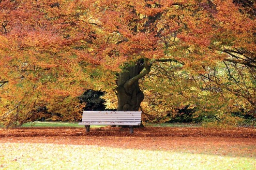 autumn-200012_640
