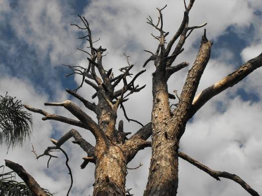 tree-272130_640