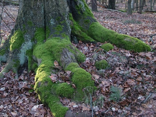 tree-96973_640