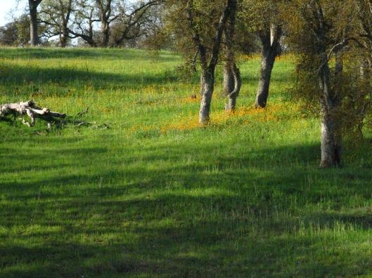 Hornitos, Spring, Hills