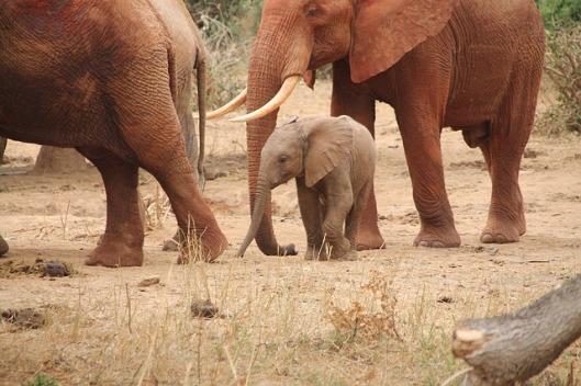 elephant-192920_640