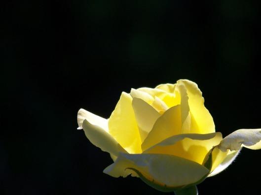yellow-17813_640