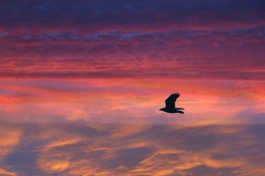 bird-226700_640