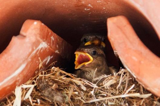 sparrow-18215_640