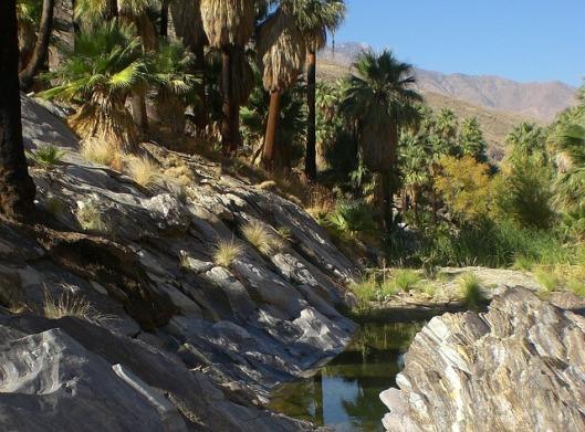 palm-canyon-360882_640