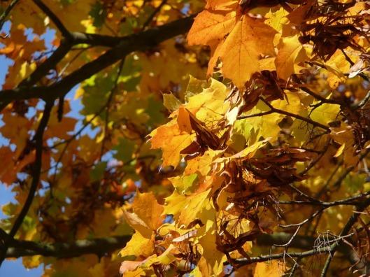 leaves-18597_640