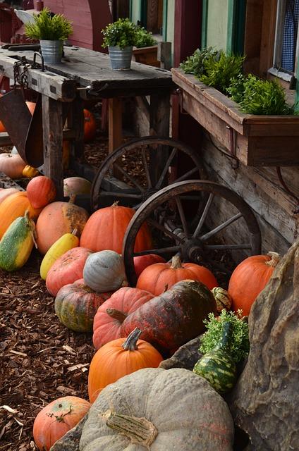 pumpkins-485081_640