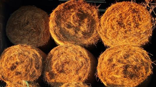 straw-bales-247161_640