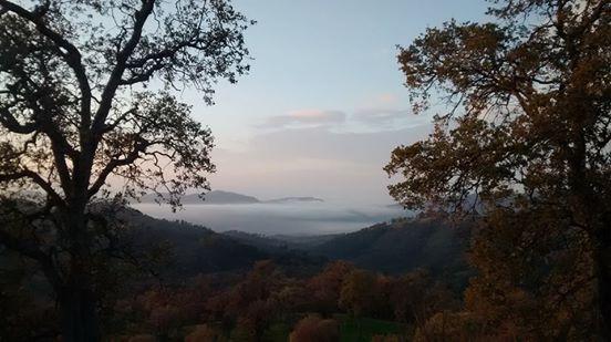 Foggy-landscape-1