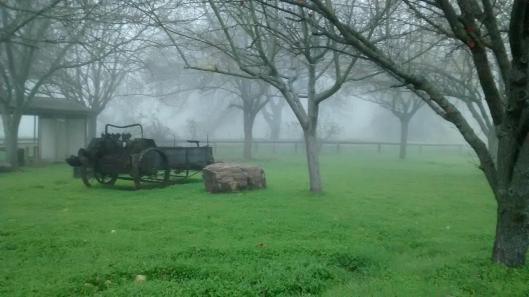 Foggy-oasis
