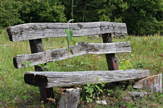 old-wood-bench-425645_1280