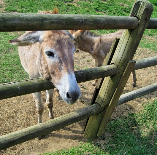 donkey-316042_640