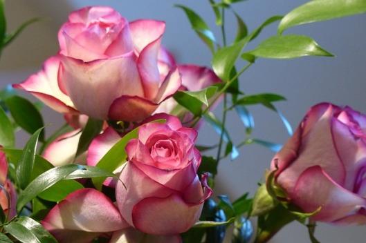 rose-687966_640