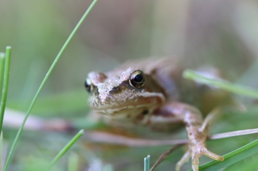frog-962038_640