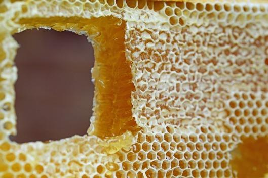 honeycomb-347558_640