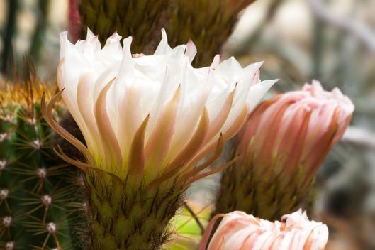 cactus-789100_640